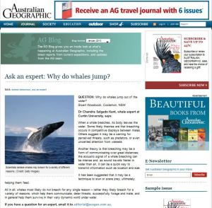 Why do whales jump? Australian Geographic