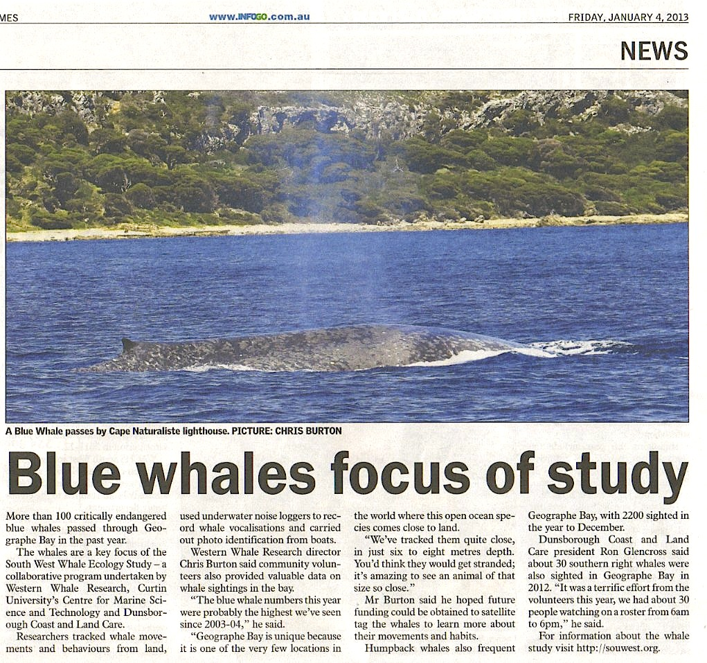Essay/Term paper: Blue whales