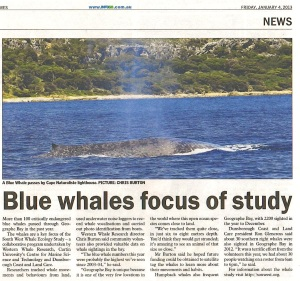 Blue Whales Focus of Study