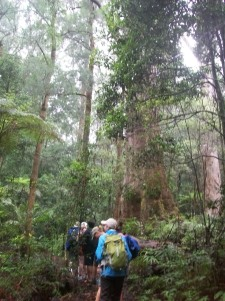Field Trip to Lamington National Park