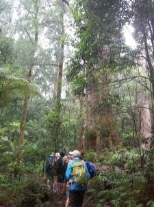 Field Trip to Lamington National Park