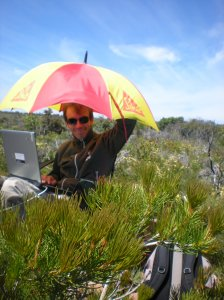 What does an umbrella up a hill have to do with whale research? Tell us your ideas!
